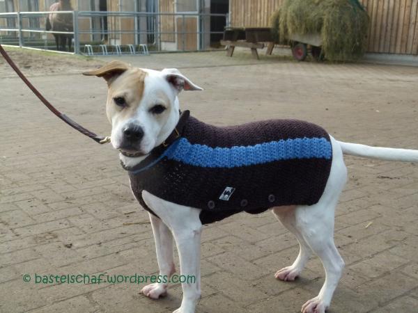 Hund hat Mantel – endlich! – Neues vom Bastelschaf