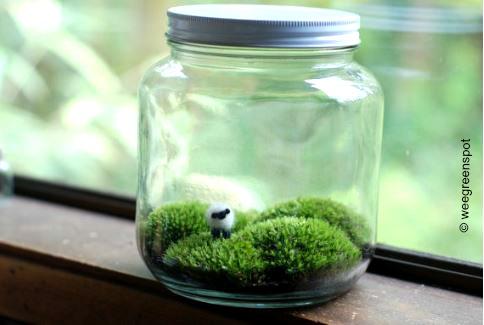 Schaf im Glas